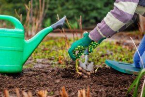 Care sunt anotimpurile potrivite pentru plantarea legumelor?